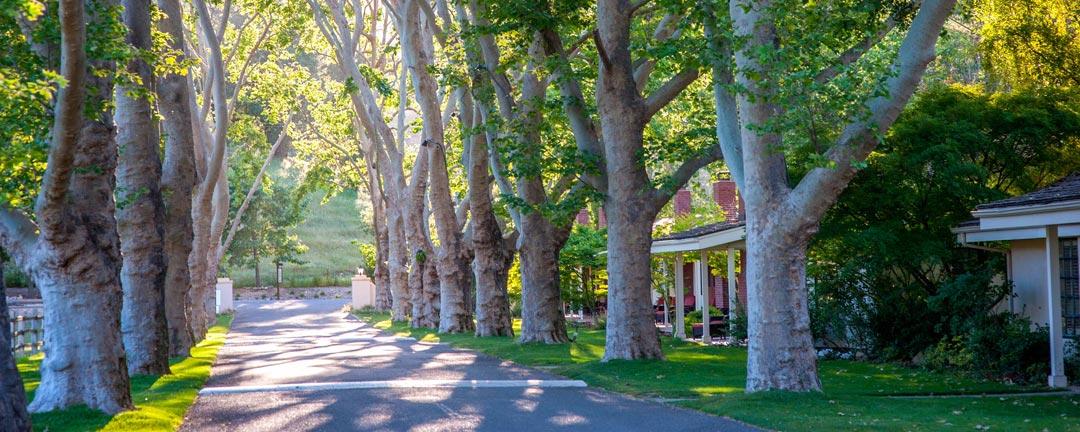 alisal-ranch-tree-lined-street-1080x432
