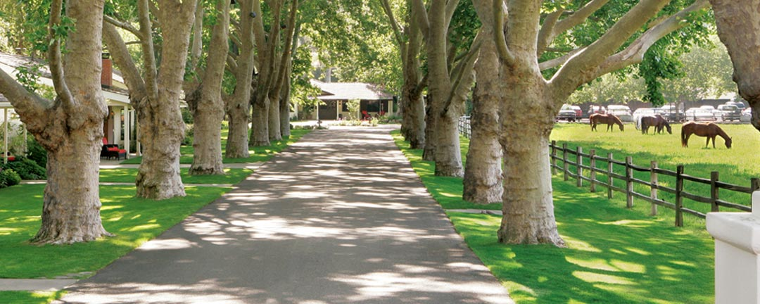 alisal-ranch-tree-lined-street-horses-1080x432